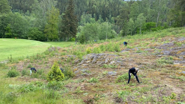 Uklizená skalka na jamce č.5 v Cihelny Golf & Wellness Resort